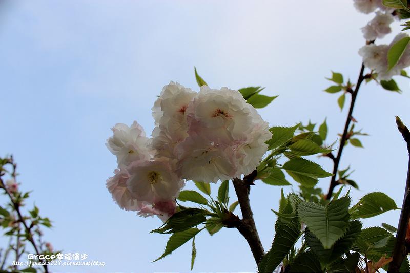 PhotoCap_IMG_9151