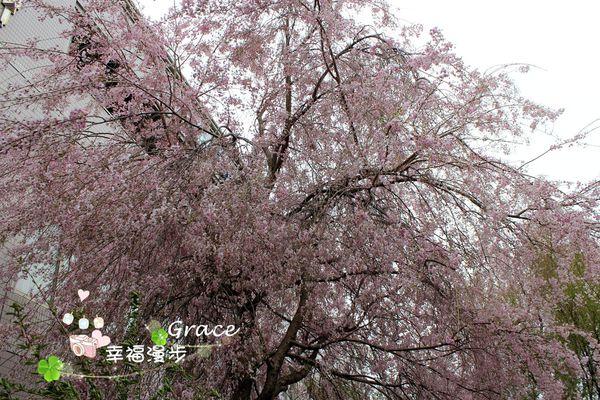PhotoCap_IMG_1182