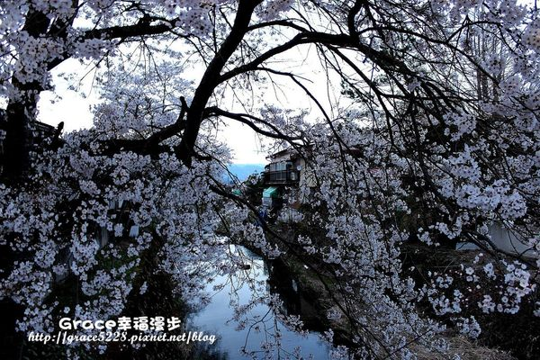 PhotoCap_IMG_0658