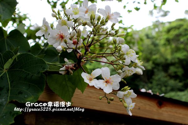 PhotoCap_IMG_1332