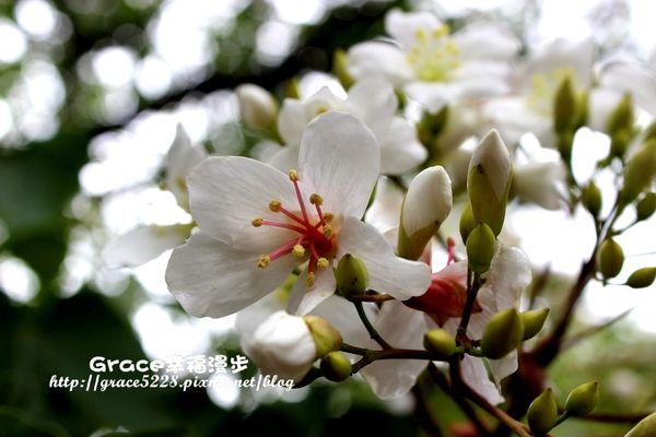 PhotoCap_IMG_1343