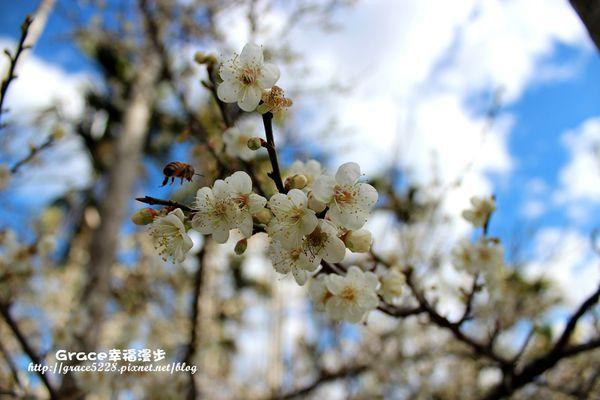 PhotoCap_IMG_9406