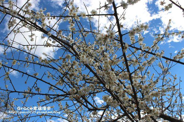 PhotoCap_IMG_9457