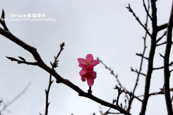 PhotoCap_IMG_9071_018