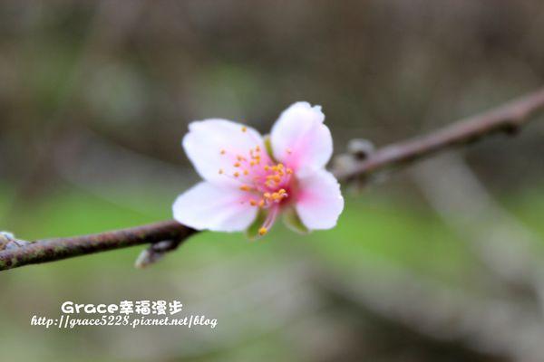 PhotoCap_IMG_8868_018